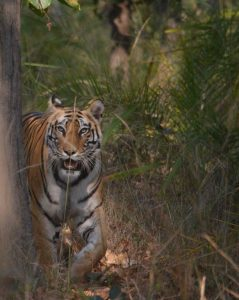 The Tigress emerged just behind us